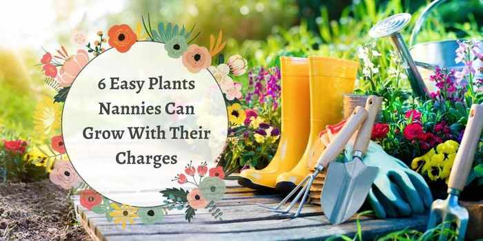 6 Easy Plants Nannies Can Grow With Their Charges